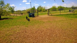 Norman, OK Community Dog Park obstacles