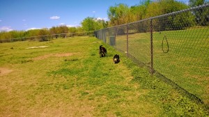 Norman, OK Community Dog Park at Griffin Park