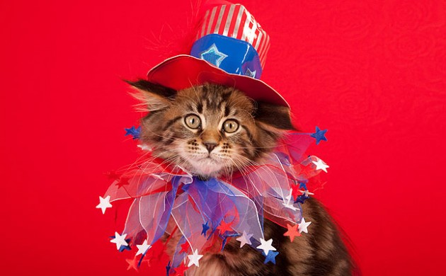 cat in a patriotic top hat