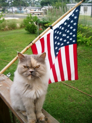 grumpy cat with American flag