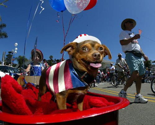 excited, patriotic dog