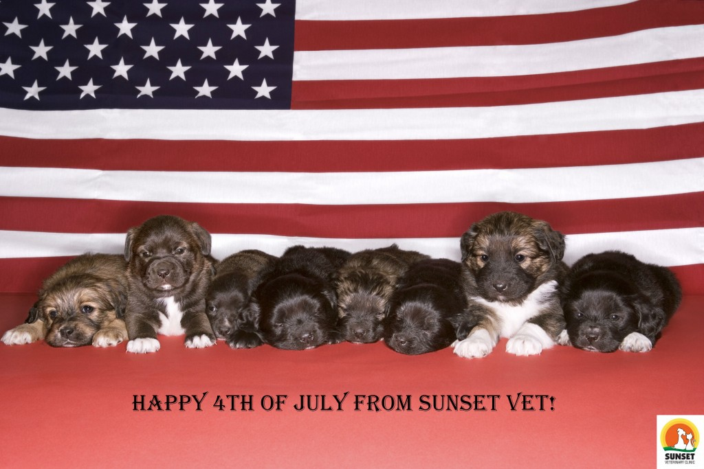 Sunset Vet 4th of July, Puppies with the American Flag