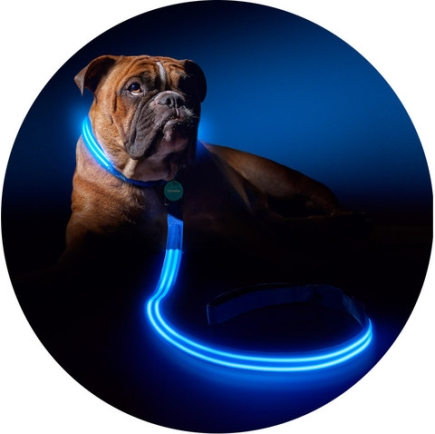 Light-up leash for dogs