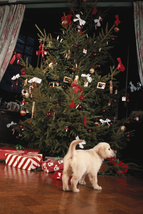 Unique Christmas Gift Ideas for Pets | Sunset Veterinary Clinic