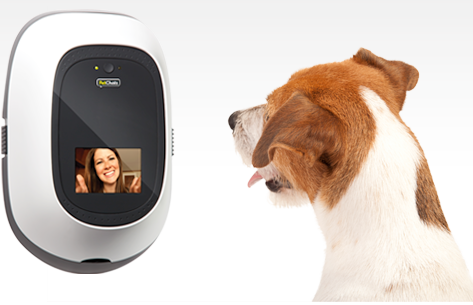 petchatz for dogs