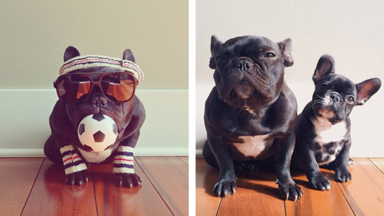 88 Must Follow Dogs of Instagram Accounts | Sunset