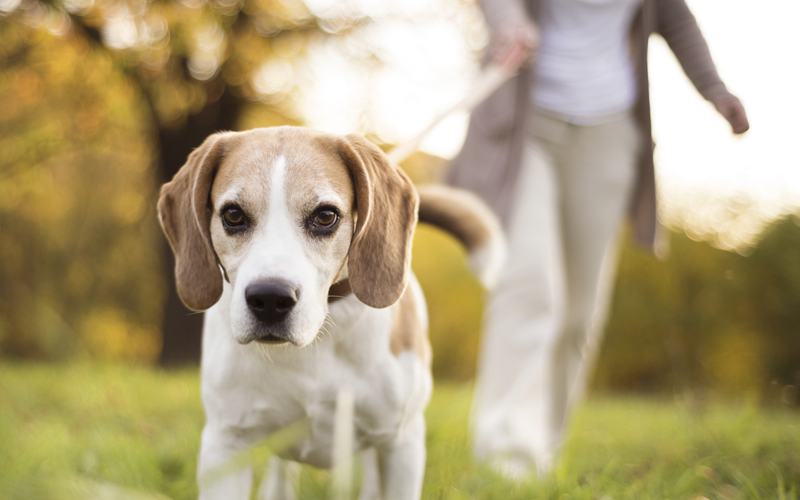 Five Surprising Health Benefits of Owning a Pet