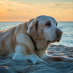 Ask the Vet: Why Do Dogs Have Short Life Spans?