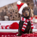 Holiday Gift Ideas for the Pets on Your List