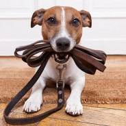 Dog Training Tips the Trainers Swear By