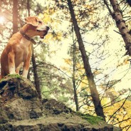 Let's Ruff It: Oklahoma Has the Best Pet-Friendly State Parks and Trails