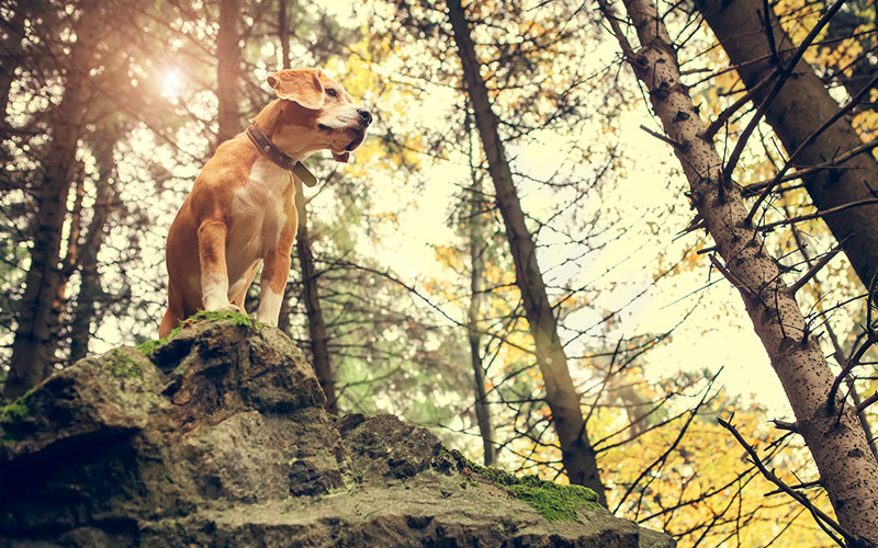 Pet Dog Hiking Trails