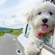 Five Things You Need to Know Before You and Your Pet Hit the Road