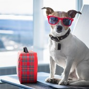 Top 5 Pet-Friendly Airports in the U.S.