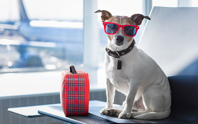 Dog In Airport With Suitcase