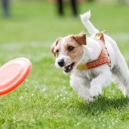 5 Summer Activities Your Dog Will Love, Vol 1
