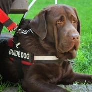 September is National Guide Dog Month