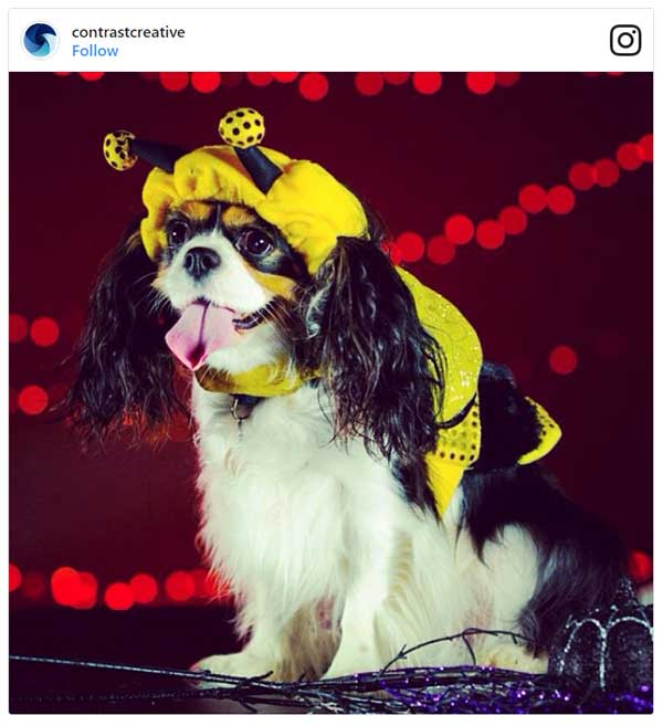 Dog in Bumble Bee Costume