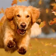 Dog Safety in the Fall: 7 Essential Tips