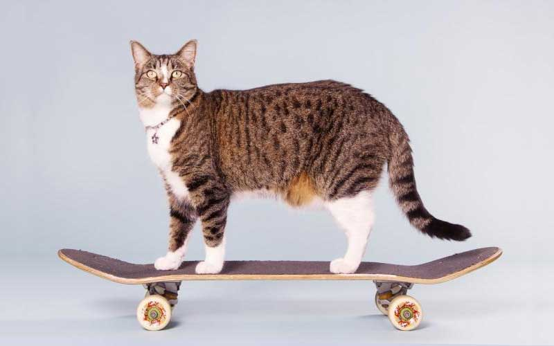 October 29 Is National Cat Day Sunset Veterinary Clinic