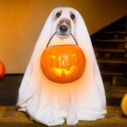 5+ DIY Pet Halloween Costume Ideas