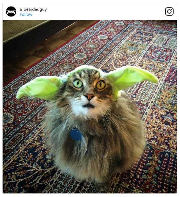 Cat Dressed As Yoda