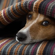 5 Warning Signs Your Pet is in Pain