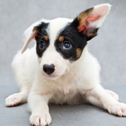 Celebrate National Mutt Day With 5 Great Reasons to Adopt a Mutt