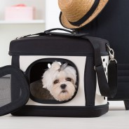 In the News Recently: Puppy Dies During Airline Flight