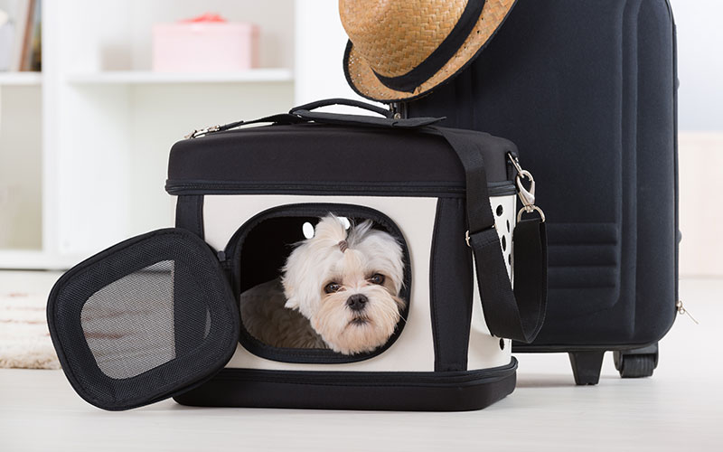 Dog in Carrier by Suitcase at Airport