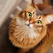 Whiskers: What They Do and Why Cats Have Them