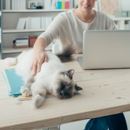 What are the Pros and Cons of Office Pets