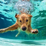5 Steps to Pool Safety for Dogs and Cats