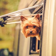 The Right Steps for Taking Your Dog Camping