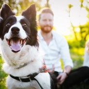 How to Keep Dogs Healthy in the Summer