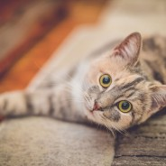 Ask the Vet: Does My Pet Have Cataracts
