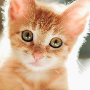 Ask the Vet: What Should Be on My New Kitten Checklist