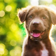 Ask the Vet: What Should Be On My New Puppy Checklist