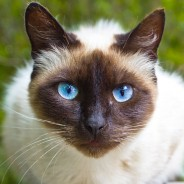 Ask the Vet: Are Hairballs a Serious Problem