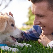 Things People Should Consider Before Adopting a Dog from a Shelter