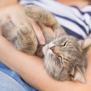 4 Ways a Pet Can Help Reduce Stress