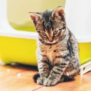 Ask the Vet: Why Did My Cat Stop Using the Litter Box?