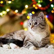 4 Fun Ways to Include Your Pet in Holiday Festivities