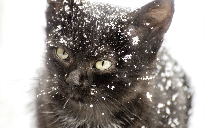 Kitten in the Snow