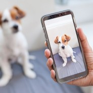 Ways Your Smartphone Camera Can Improve Your Next Vet Visit