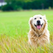 How Aging Affects Your Dog