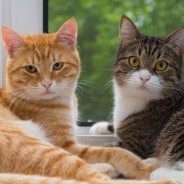 Ask the Vet: What Do I Do If My Cats are Fighting?