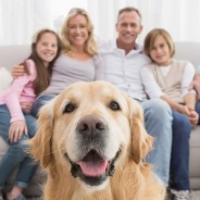 How to Have a Pet-Friendly Home