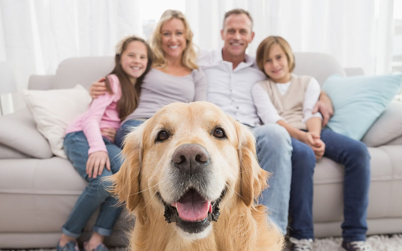 Golden Retriever With Family