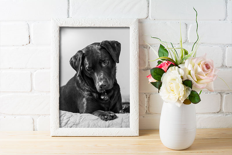 Framed Photo of Dog Next to Flowers